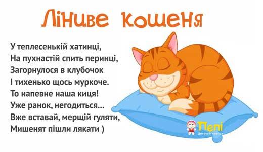 Киця соня